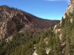 South Boulder Mountain burn damage from June 2012 fire, seen from near Devil's Thumb